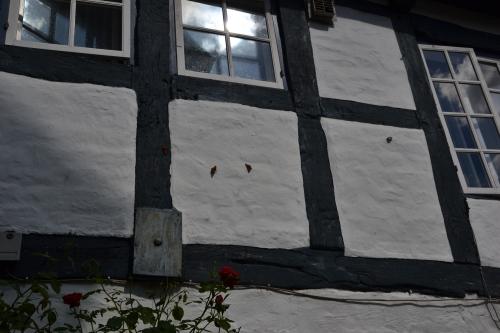 Let ook op de enorme hoeeelheid vlindersop de muur...